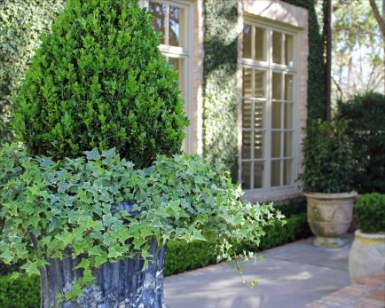 Boxwood Cone Planter
