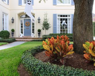 Our enhancements manager, Carrie Pattat, did a few minor change-outs on this property and it made a huge difference! She replaced a row of hedges, planted eagleston hollies and added crotons around the tree. Now this home is festive for fall and ready for trick-or-treaters!