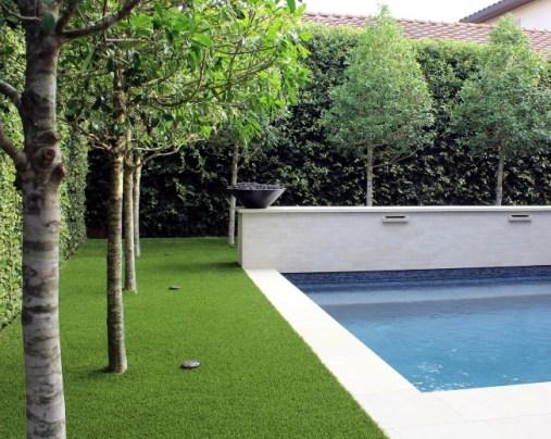 Backyard-Trees