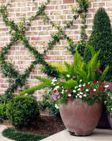 trellised-plants