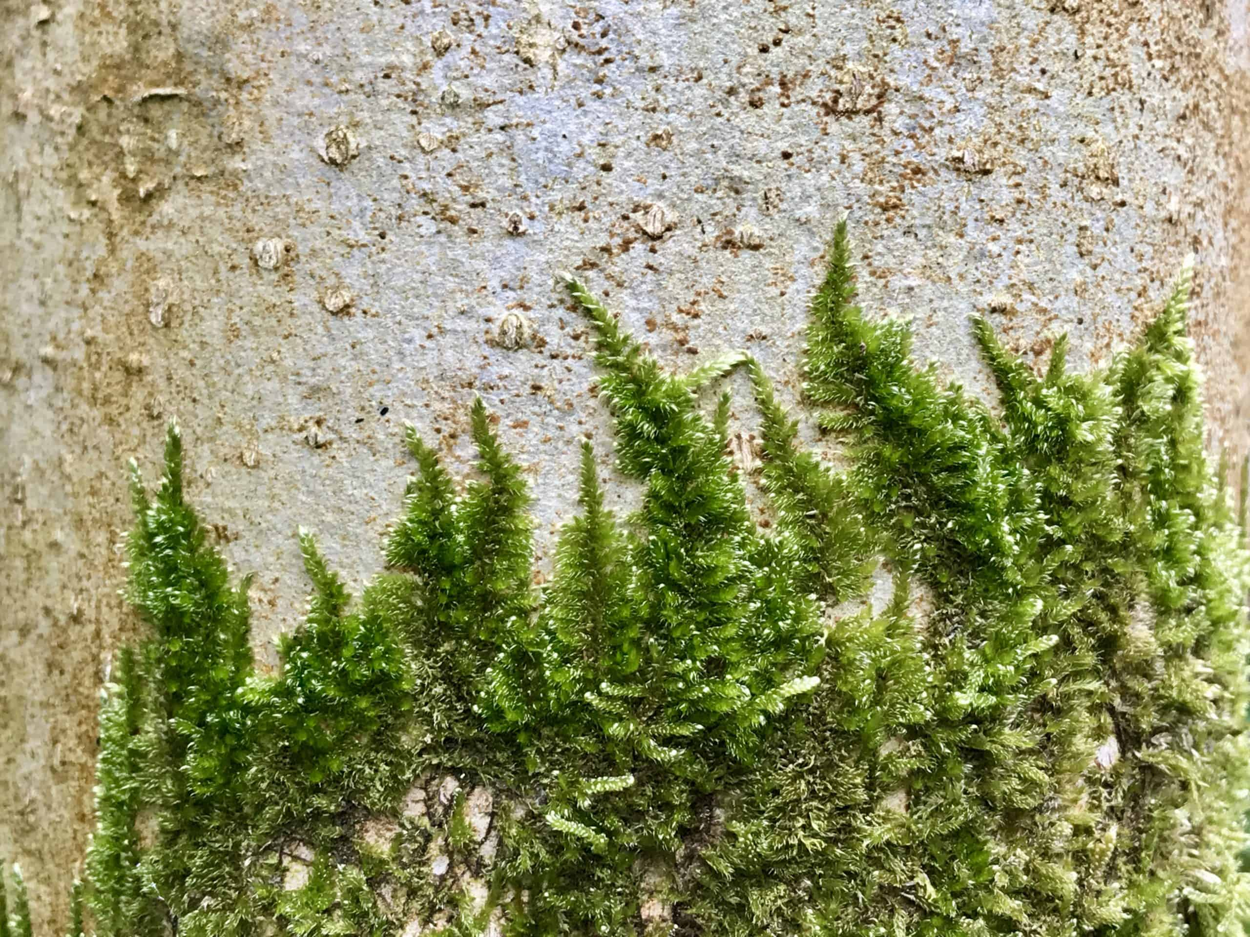 How Fast Does Moss Grow Moss Growth Rates Moss Lovers