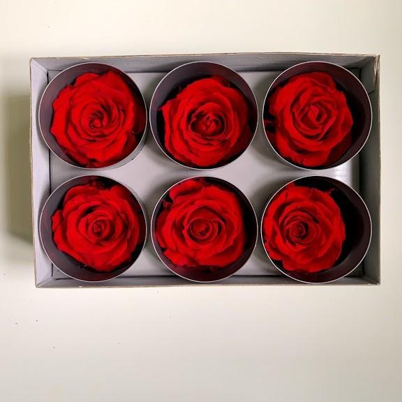 роза красная55