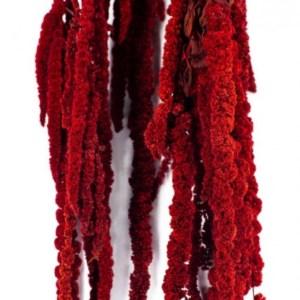 амарант красный556