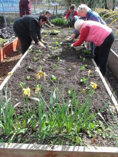 second growing workshop, planting the lettuces and the brussell sprouts together!