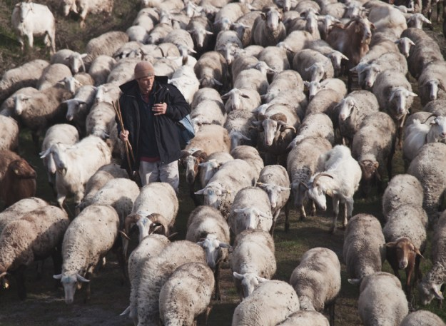 shepherd in turkey