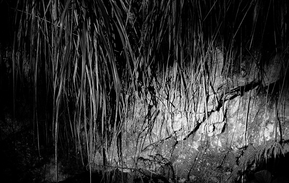 Grasses Overhanging A Rock, Thuringian Forest