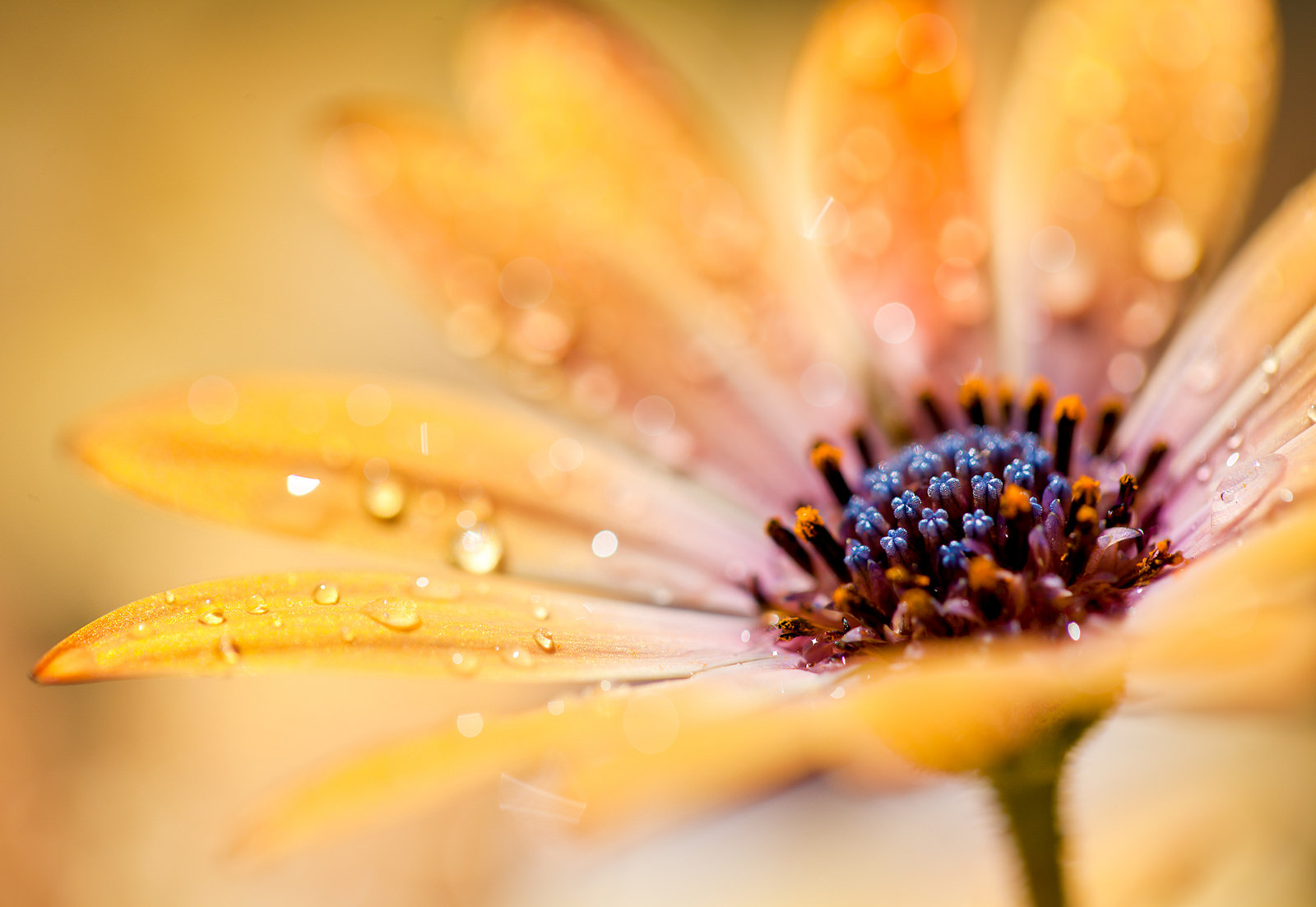 8 Macro Flower Photos to Inspire you - Mostly Lisa ...
