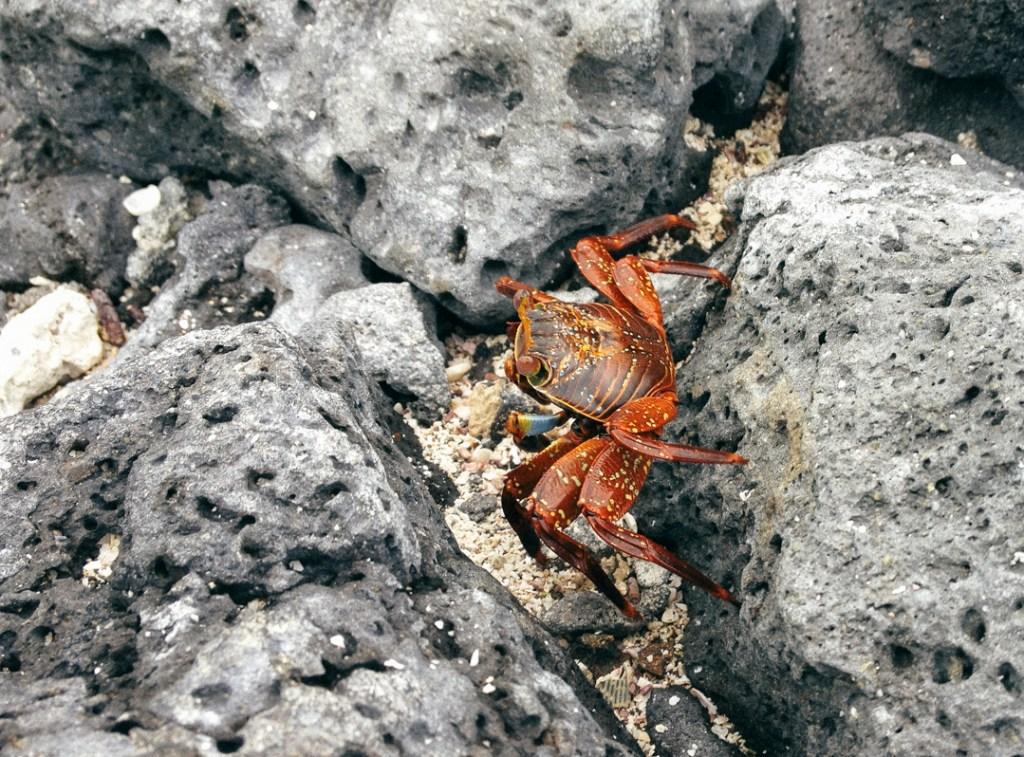 crabbythegalapagoscrab