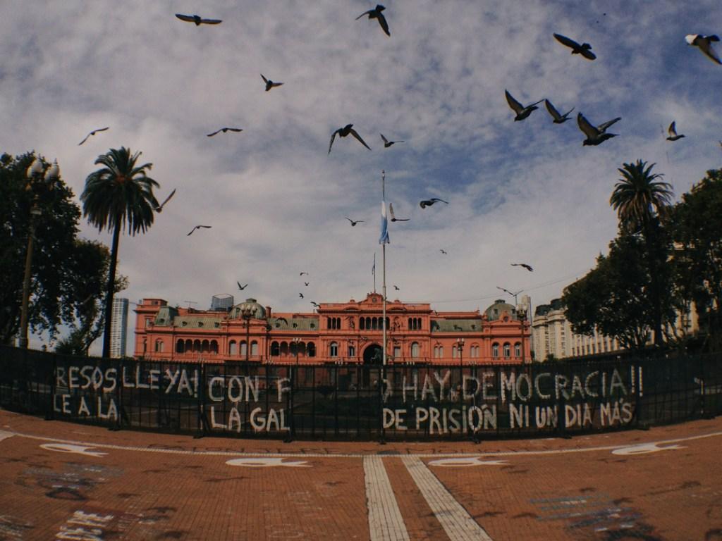 Birds over Casa Rosa