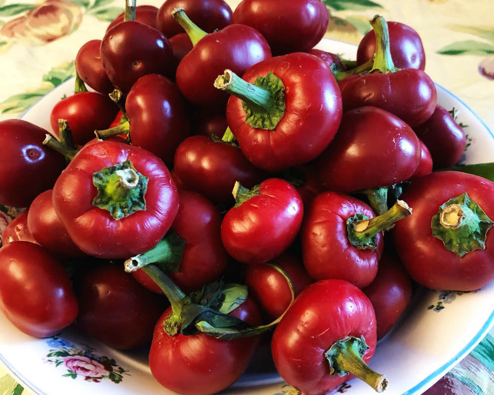 fresh cherry peppers