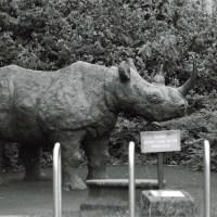 Please Do Not Climb on the Rhinoceros