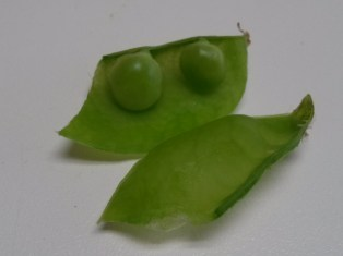 Pea pod with two peas