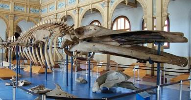 Inédita cena en museo de historia natural