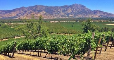 El Servicio Agrícola y Ganadero, SAG, presentó el Catastro Vitícola Nacional 2018 que mostró un alza en la superficie plantada con vides viníferas en Chile.