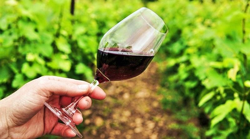 Hoy, el último jueves de agosto, se celebra en todo el mundo el Día de la Cabernet Sauvignon, una cepa tinta de origen francés. Nace en el siglo XVII como una mezcla entre Cabernet Franc y Sauvignon Blanc