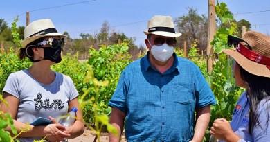 Dos nuevas reaperturas en el ámbito del enoturismo acaban de ser anunciadas para el presente mes de diciembre. Una de ellas es la Ruta del Vino del Desierto, en la Región de Tarapacá; mientras que la otra corresponde a la viña Santa Rita en el Valle del Maipo.