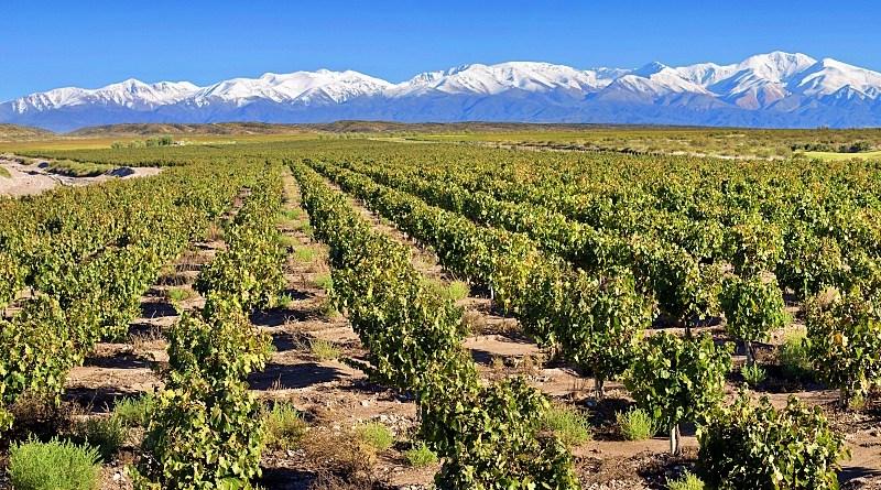 Doña Paula obtuvo la certificación vegana que otorga el organismo de inspección y certificación Liaf Control para todas sus líneas de vinos.