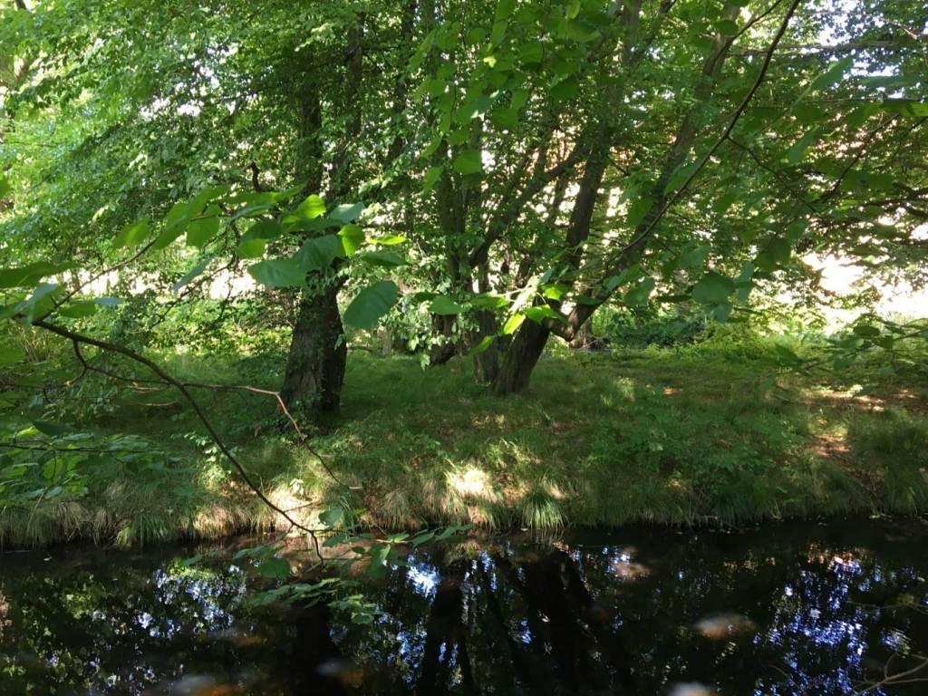park, zieleń, woda