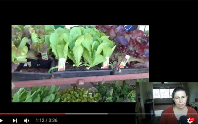 Galactagogue Garden 2 – Buying Starters