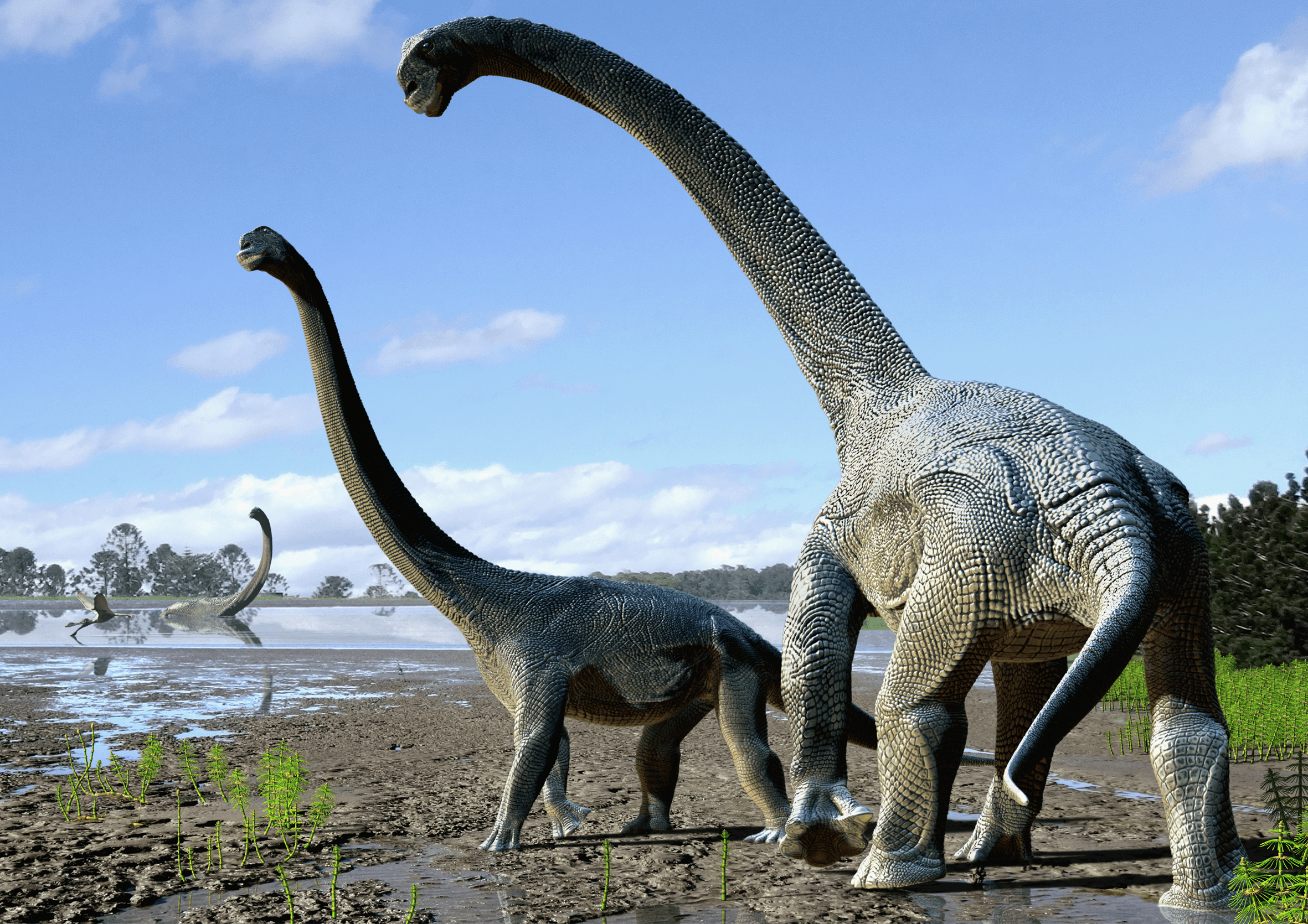 "Concept art of Savannasaurus elliottorum based on the type specimen (""Wade"") and comparisons with titanosaurs from around the world. Image: Travis Tischler / © Australian Age of Dinosaurs Museum of Natural History"