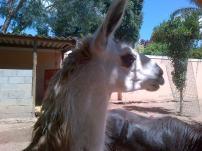 Stodels Llama