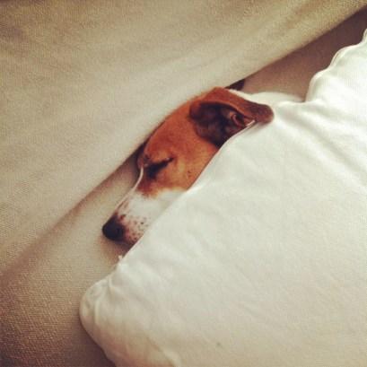 Sleeping late