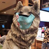 Visiting Great Wolf Lodge During Covid