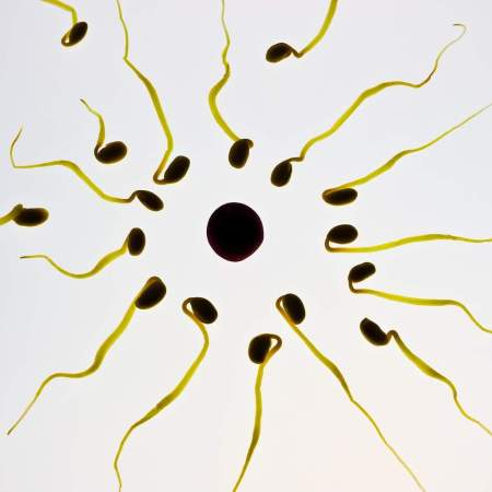 allow your partner to donate sperm