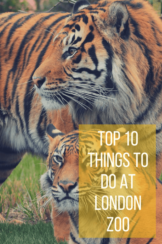 Top 10 things to do at London Zoo