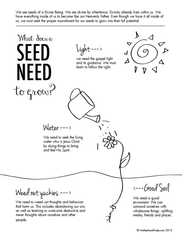 what-does-a-seed-need-02