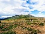 T.WRN, V.WGO,Yukon, ,T.WG, , V.CSL,
