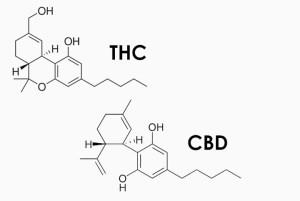 C.HUGE, FSD Pharma, Cannabis