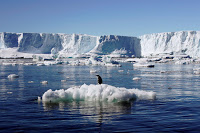 Melting ice on the coast of Adélie Land in East Antarctica. (Credit: Reuters/Pauline Askin) Click to Enlarge.