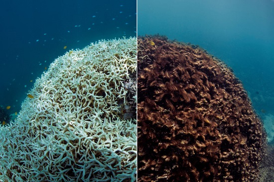 Great Barrier Reef Before & After