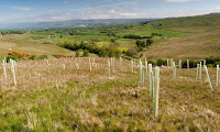 Trees have been planted on upland moor to improve wildlife habitat in Cumbria, UK. (Photograph Credit: Wayne Hutchinson/Alamy) Click to Enlarge.