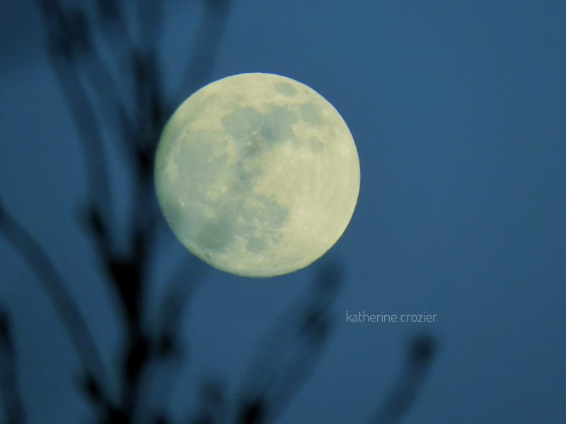 An almost full moon, behind bare tree branches.