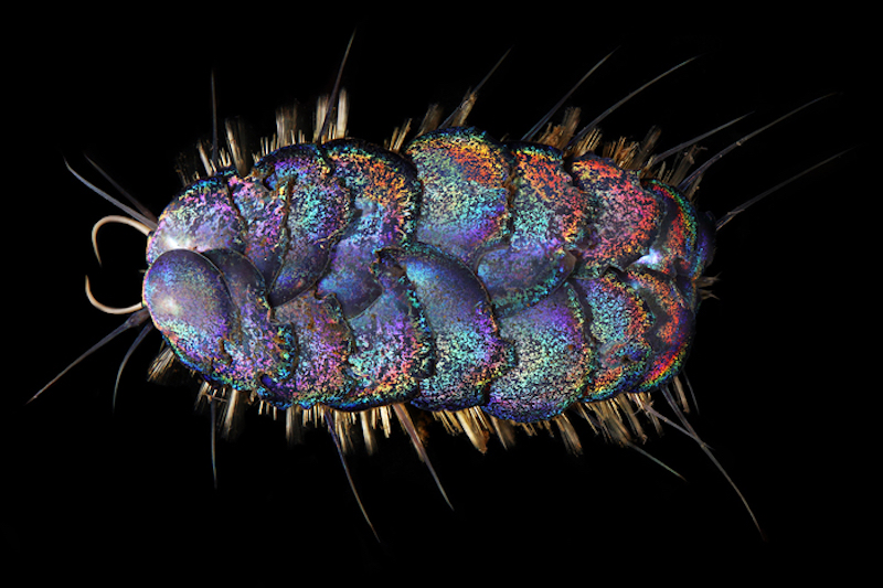 A shiny, sparkly, multicolored oval creature with overlapping segments.