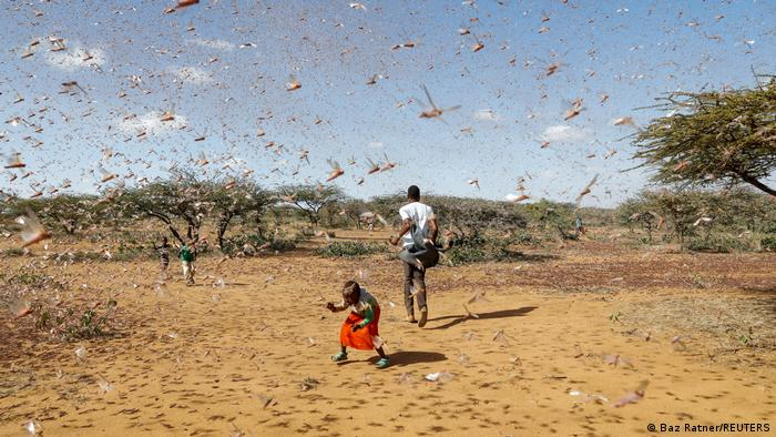 A child tries to chase away a swarm of desert locusts in Naiperere, near the town of Rumuruti, Kenya