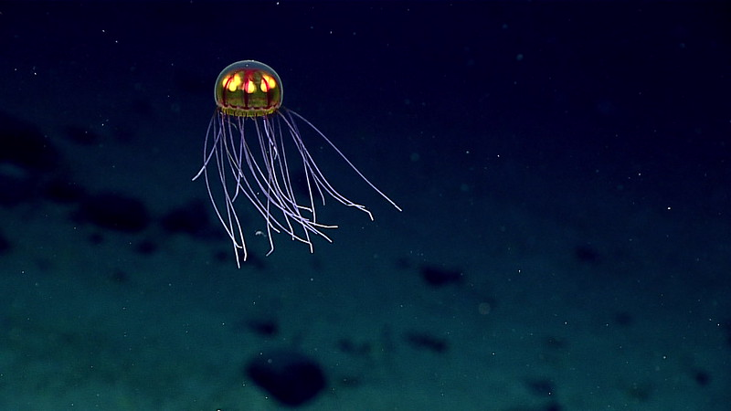 Lantern-like glowing jellyfish with long, thin, glowing tentacles hanging down.
