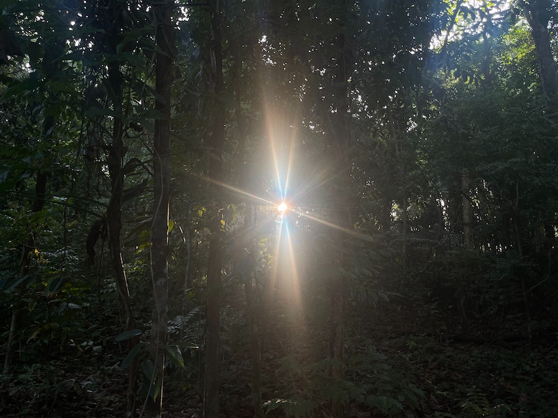 Dense forest of green trees with a sharp light in the center from the sun shining through, surrounded by rays in colours of blue through orange.