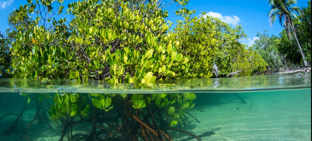 Coastal and marine ecosystems provide food, livelihoods, and coastal protection to more than a billion people worldwide.