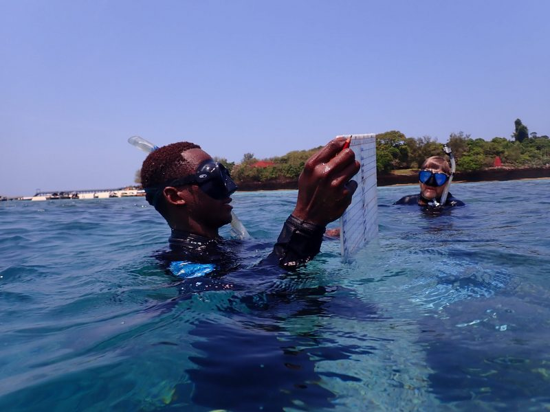 A diver neck deep in water, looking at a transparent sheet, as a 2nd diver watches from nearby.