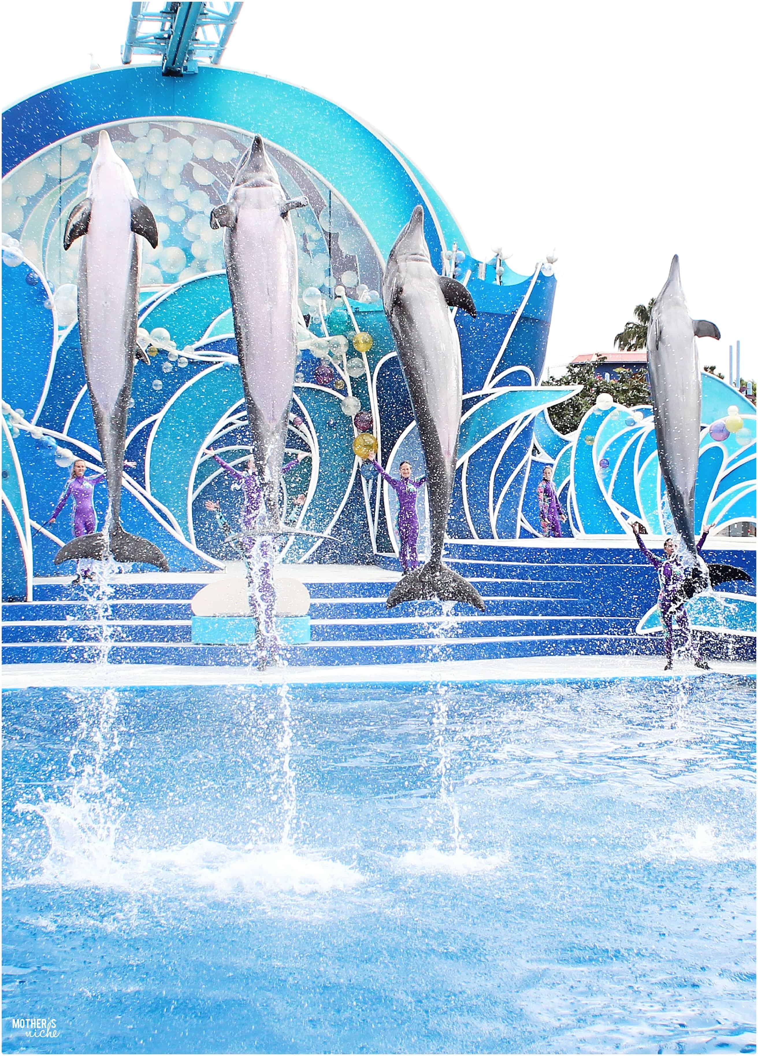 Dolphins sea world
