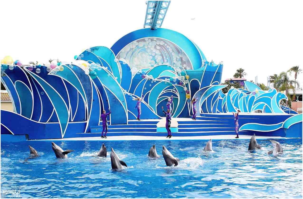 dolphin show- sea world