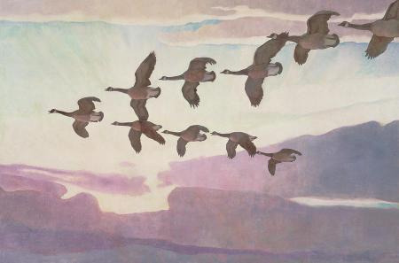 watercolor of canadian geese flying
