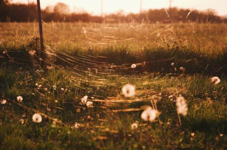 photograph of gossamer between flowers in a field