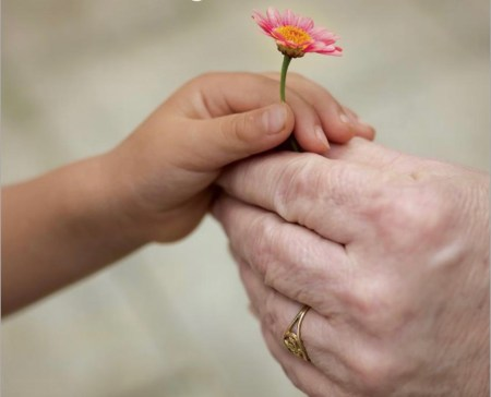 child's hand giving a flower to older person
