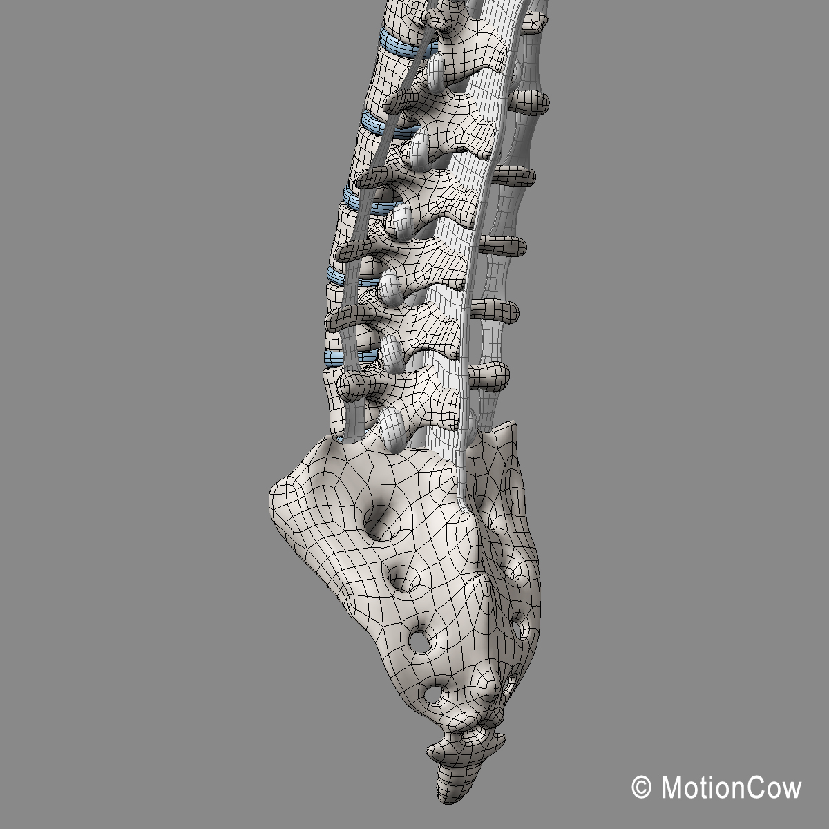 Spine Ultimate Motioncow