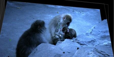 背景に猿が被っているところはペイントツールで消しています。