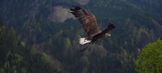 Erfülltes Leben - Adler statt Ente